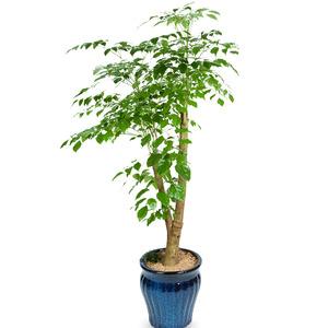 해피트리(행복나무)6